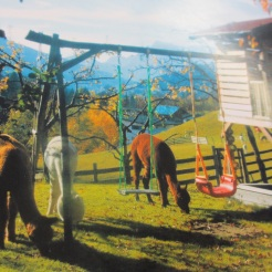 Idylle mit Alpakas am Königshof
